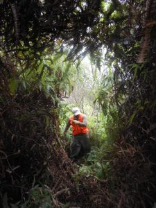 Clearing through and uluhe thicket, yikes!
