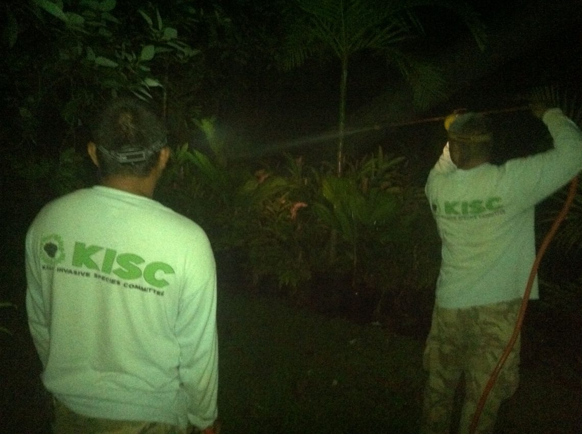 Night spraying with citric acid