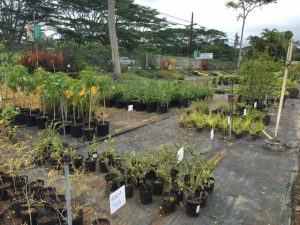 Native plant section at KNL
