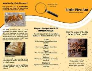 Little-Fire-Ant-Brochure-1