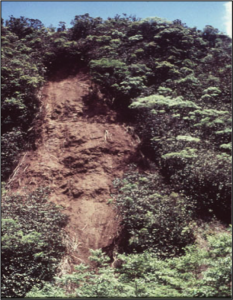 Landslide in Miconia infestation on Maui Photo Credit: MISC